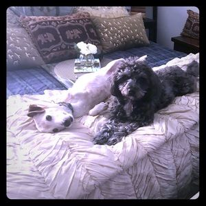 Sadie & Timmy relaxing together